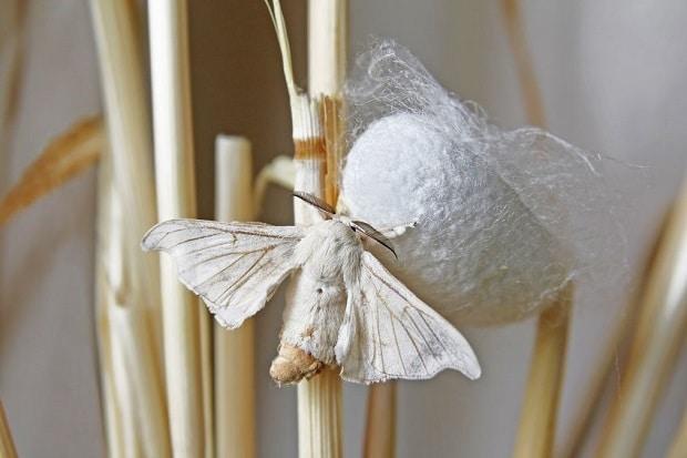 El origen de la seda: ¿Cómo se fabrica la seda?